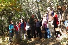 XXXVI Día de la Seta de Extremadura en Cañamero (1)