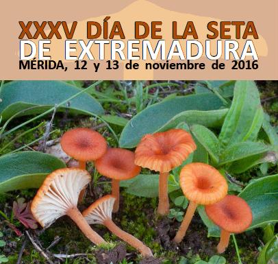 XXXV Día de la seta de Extremadura (Mérida)