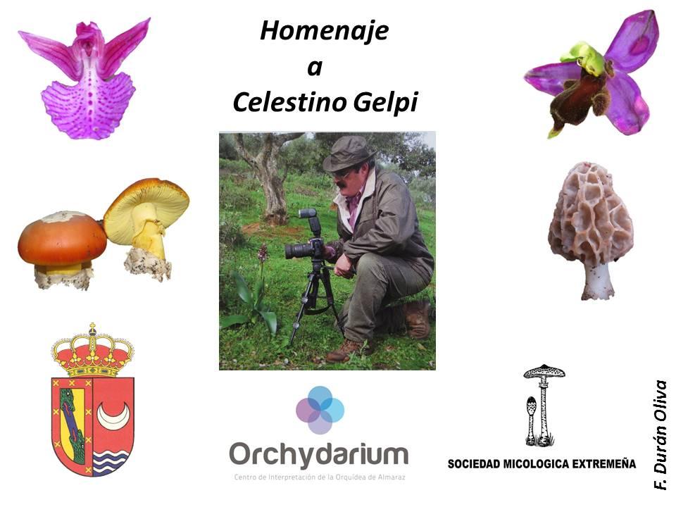 Homenaje a Celestino Gelpi