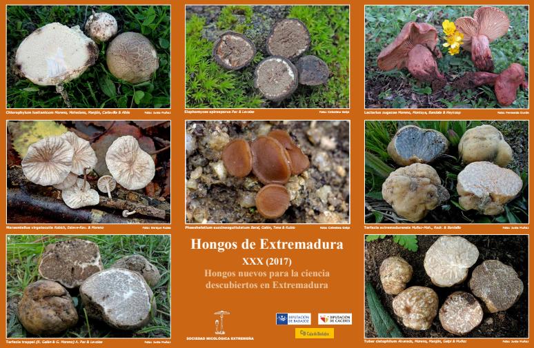 Cartel de Hongos de Extremadura XXX