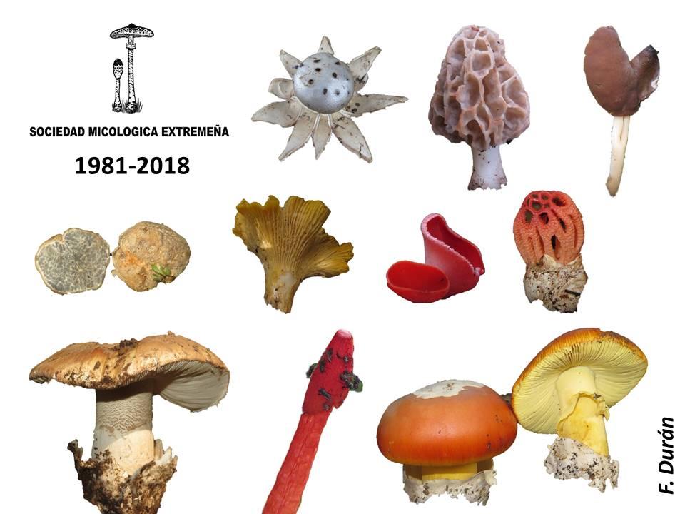 MICOEX - Sociedad Micologica Extremeña cumple 37 años