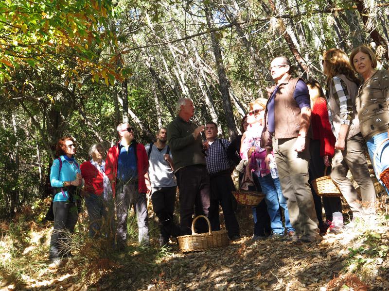 XXXVI Día de la Seta de Extremadura en Cañamero